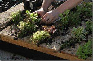Como hacer un jardín vertical