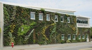 Tipo de jardínes verticales F+P