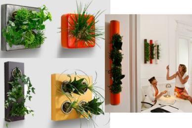 Plantas para jardines verticales o azoteas verdes - Como hacer un jardin vertical de interior ...