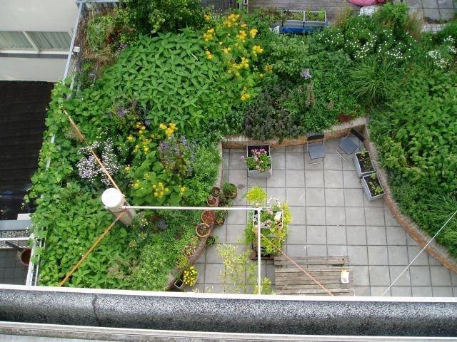 Qu es una azotea verde jardines verticales web Plantas para paredes verdes