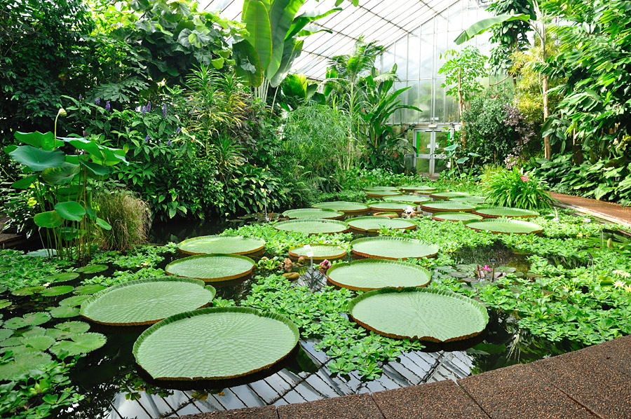Tipos de jardines for Caracteristicas de los jardines verticales