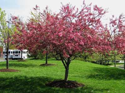 10 tipos de rboles para decorar el jard n for Arboles de jardin de hoja perenne
