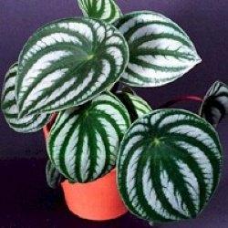 Plantas para jardines verticales o azoteas verdes for Gramineas ornamentales vivero