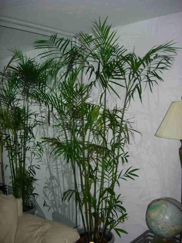 Plantas para jardines verticales o azoteas verdes - Plantas para jardines verticales ...