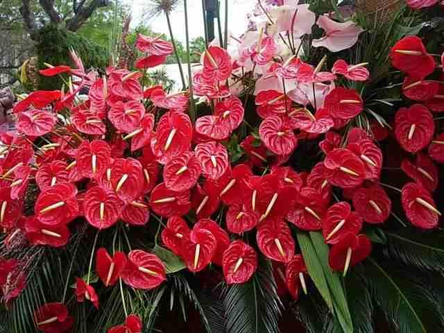 Plantas para jardines verticales o azoteas verdes for Jardines de anturios