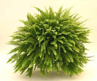 Plantas para jardines verticales o azoteas verdes - Plantas para el exterior ...