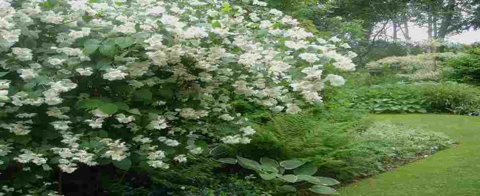 arbustos para jardines verticales y sus beneficios