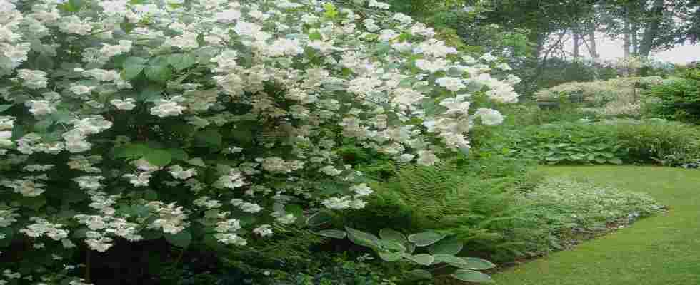Arbustos para jardines verticales y sus beneficios - Arbustos para jardin ...