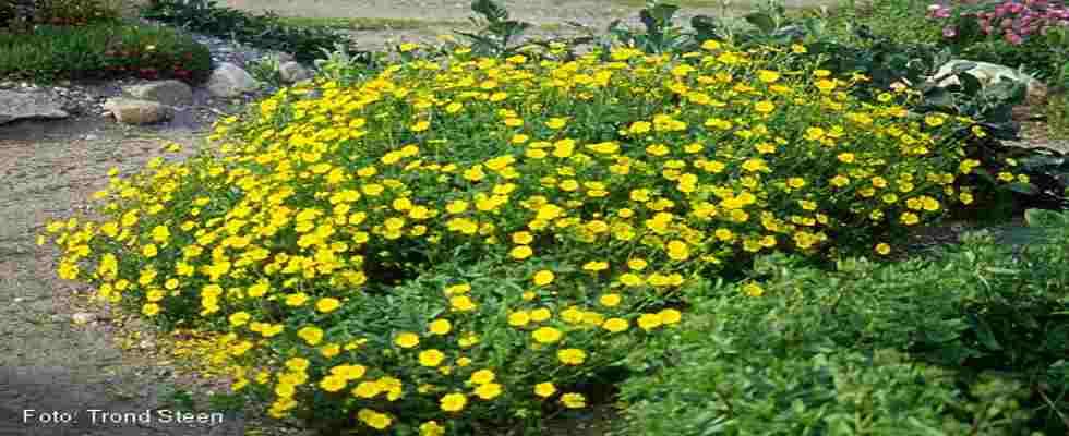 Arbustos para jardines verticales y sus beneficios for Arbustos con flores para jardin