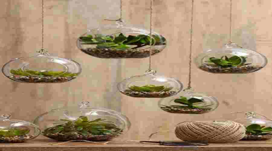 C mo hacer un jard n de aire para decorar el interior de Plantas limpiadoras de aire