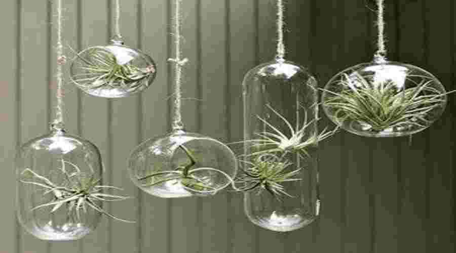 C mo hacer un jard n de aire para decorar el interior de for Plantas de interior limpian aire