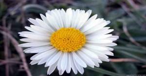 Flores para decorar el jardín