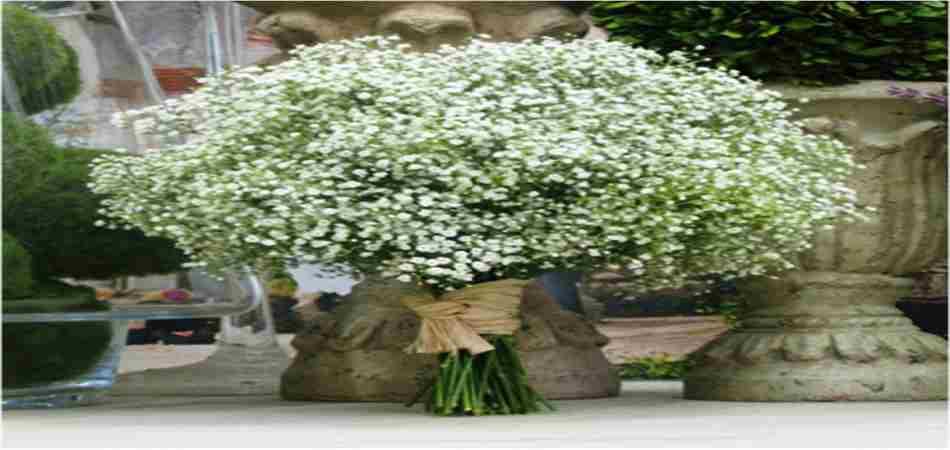 Flores para decorar el jard n y sus caracteristicas for Plantas jardin baratas