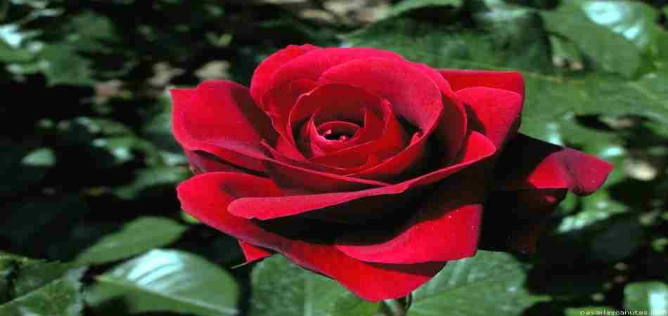 Flores para decorar el jardín y sus caracteristicas