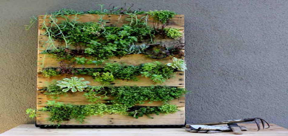 Como cuidar las plantas de los jardines verticales for Plantas recomendadas para jardin vertical