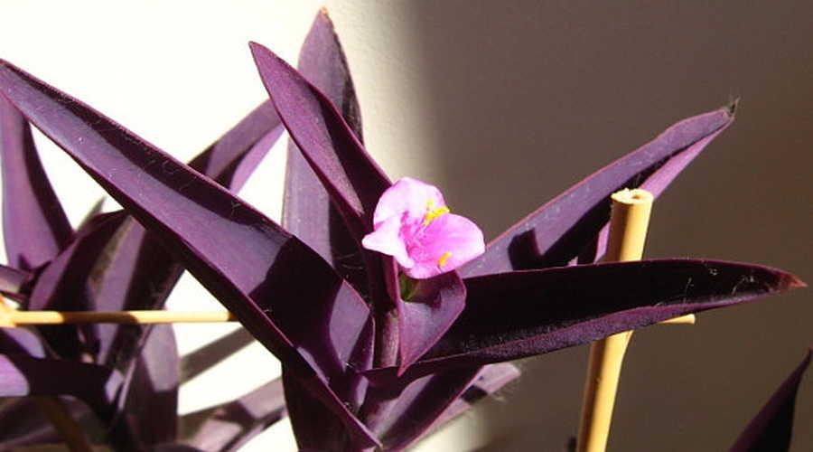 Efectos positivos de las plantas en el hogar1