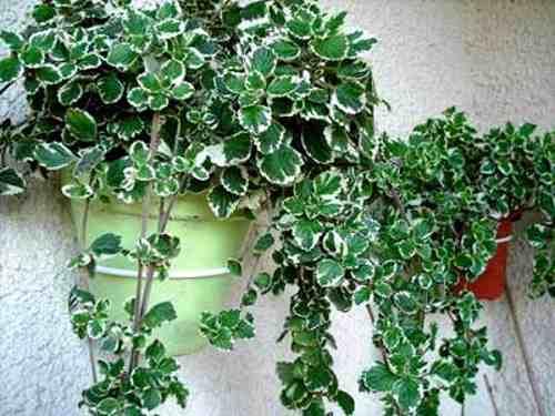 Tipos de especies para jardines verticales - Plantas de interior tipos ...