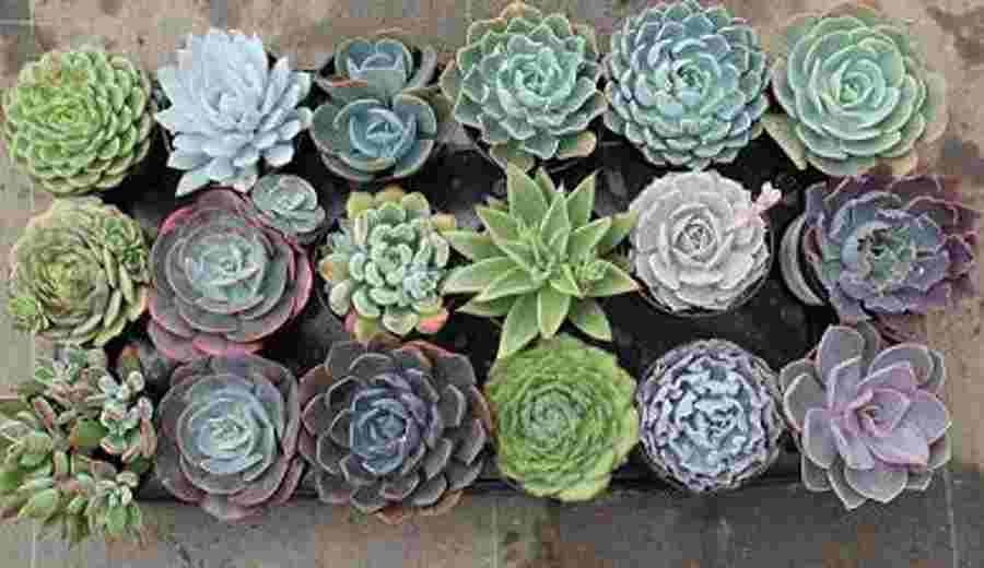 tipos de especies para jardines verticales On tipos de plantas de jardin